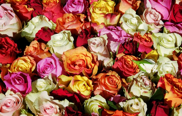 Picture flowers, roses, bouquet, pink, white, orange, buds, colorful, a lot, bouquets