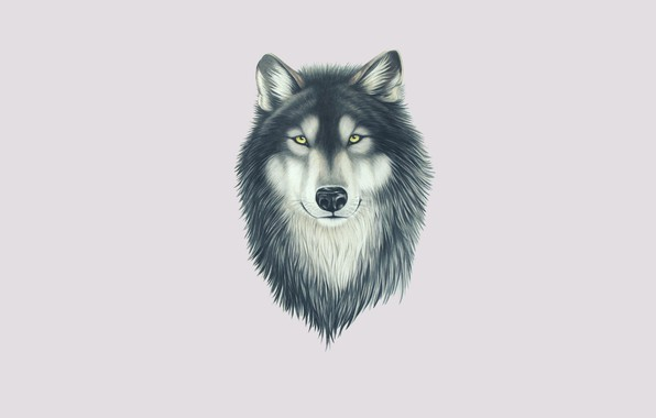 Picture look, face, wolf