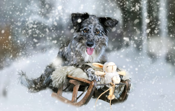 Picture snow, toy, dog, rabbit, Bunny, sled