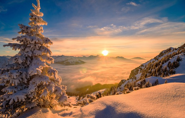 Picture winter, the sun, clouds, trees, landscape, mountains, nature, tree, spruce, snow