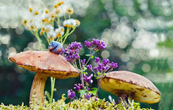 Picture macro, flowers, nature, mushrooms, moss, snail, bokeh