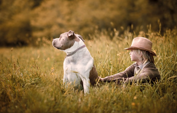 Picture field, summer, nature, childhood, mood, dog, hat, boy, village, ears, sitting, former, village