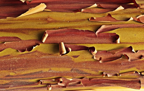 Picture surface, texture, bark, wood, arbutus, tree bark, the texture of the wood