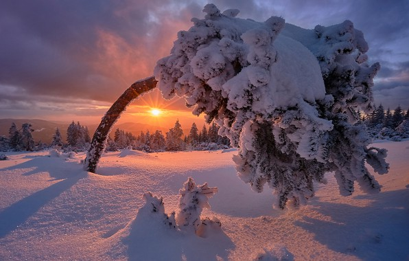 Picture winter, snow, sunset, tree, Germany, frost, Germany, Baden-Württemberg, Black Forest, The black forest, Baden-Wurttemberg