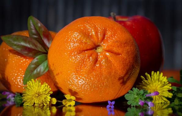 Picture leaves, flowers, citrus, Mandarin