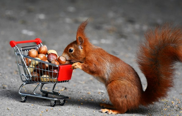 Picture protein, truck, red, nuts, purchase