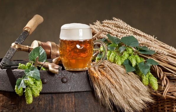 Picture wheat, foam, beer, mug, ears, barrel, tap, hops