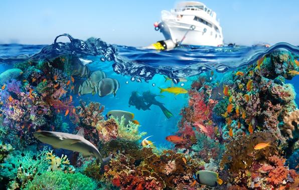Photo wallpaper Fish, Yacht, Corals, Diving, Animals, Underwater World