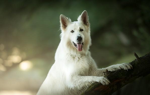 Picture language, look, dog, bokeh