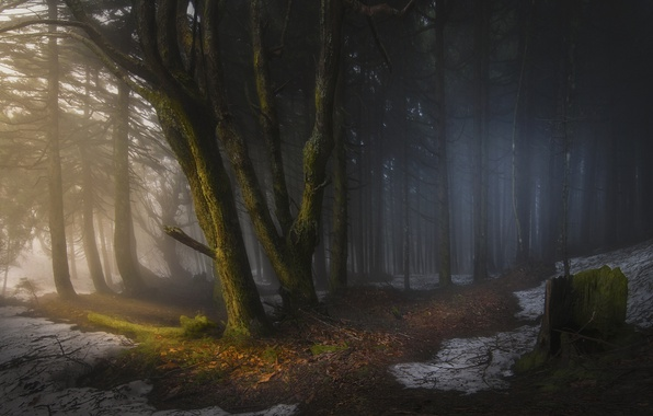 Picture forest, light, snow, trees, nature, the darkness