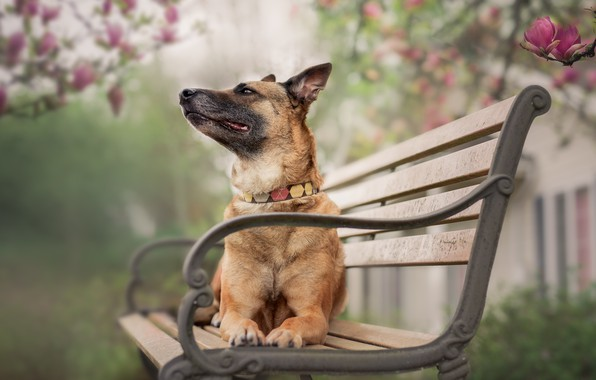 Picture nature, dog, bench