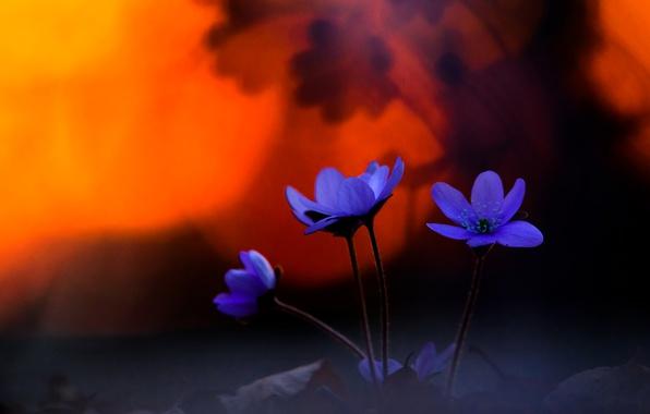 Picture spring, bokeh, Pechenocna