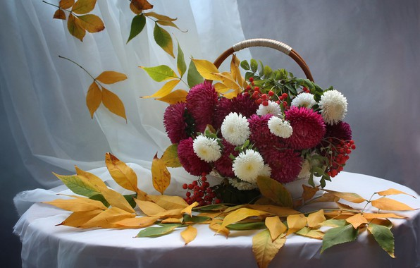 Picture autumn, leaves, flowers, still life, Rowan, September, asters