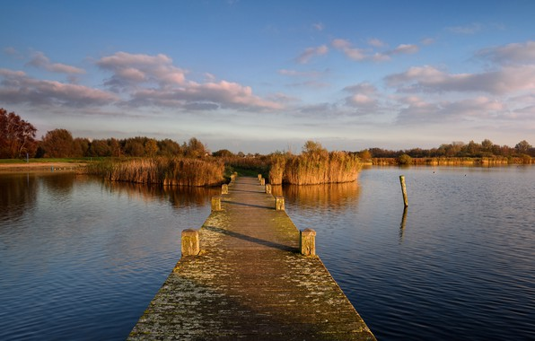 Picture autumn, forest, the sky, grass, the sun, clouds, trees, river, pier, Netherlands