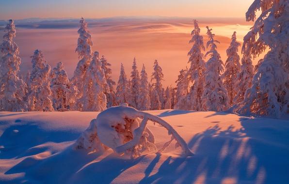 Picture winter, light, snow, frost, cold, Siberia, The Republic Of Sakha, Yakutia, minus 57