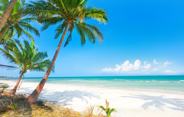 Picture sand, sea, beach, the sun, palm trees, shore, summer, beach, sea, island, sand, paradise, palms, ...