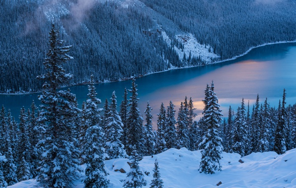 Picture Nature, Winter, Trees, Snow, Banff National Park, Canada, Peyto Lake