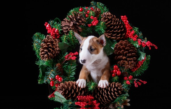 Picture berries, holiday, new year, puppy, wreath, bumps