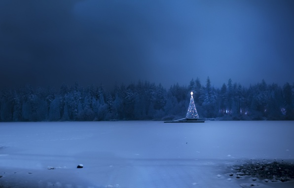 Picture cold, winter, snow, holiday, tree