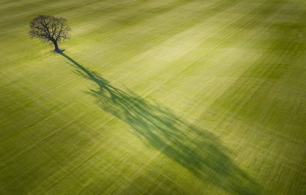 Picture field, light, tree, shadow