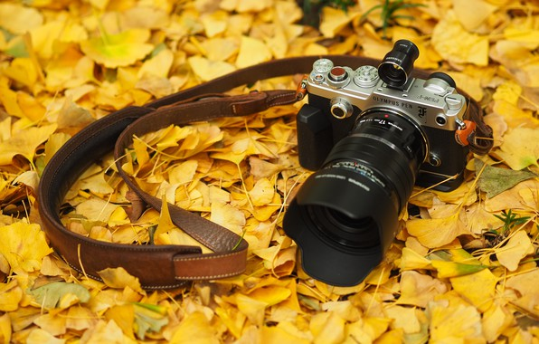 Picture autumn, leaves, the camera, Olympus