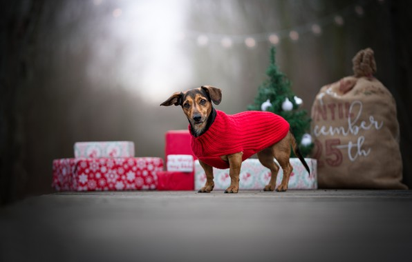 Picture dog, gifts, blouse, bag, doggie