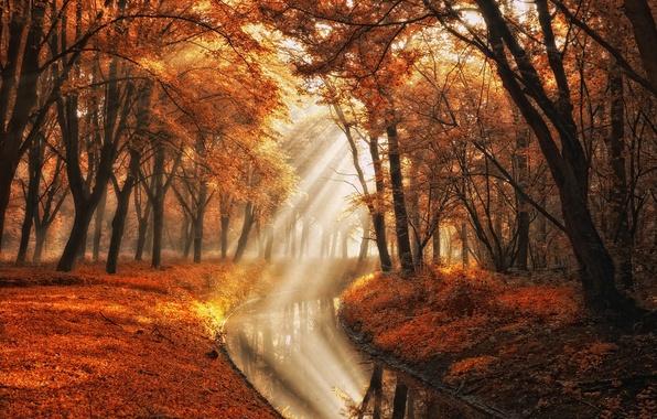 Picture autumn, water, rays, light, trees, nature, photographer, channel, Lars van de Goor
