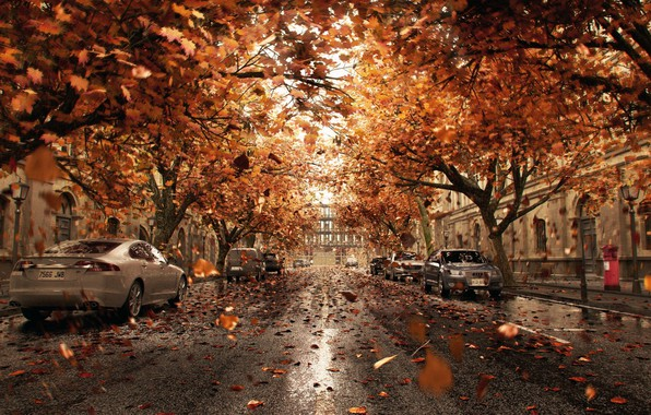 Photo wallpaper leaves, the city, street, cars, Orange Shower