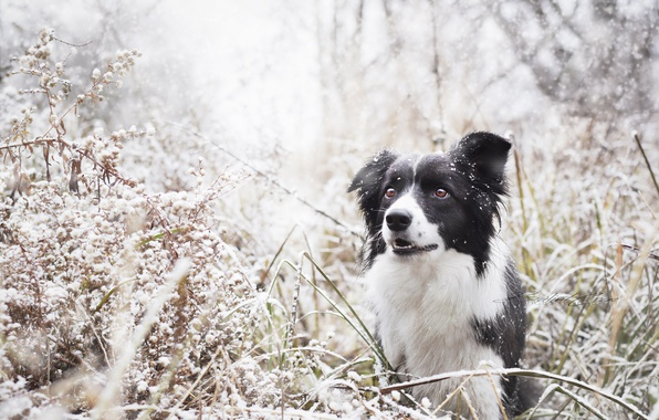 Picture winter, nature, dog