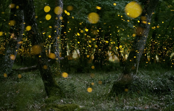 Picture forest, nature, fireflies, the evening, bokeh