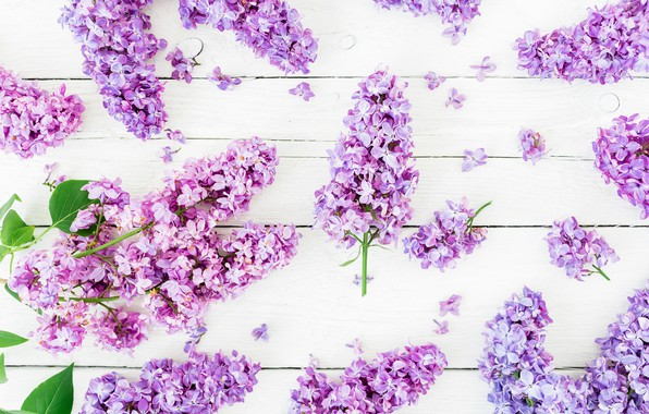 Picture flowers, spring, flowers, lilac, lilac