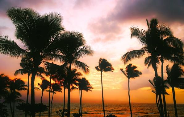 Picture sea, the sky, sunset, tropics, palm trees, the evening, horizon, Hawaii