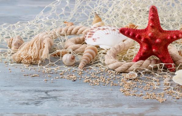 Picture sand, shell, wood, sand, marine, still life, pearl, starfish, seashells, perl