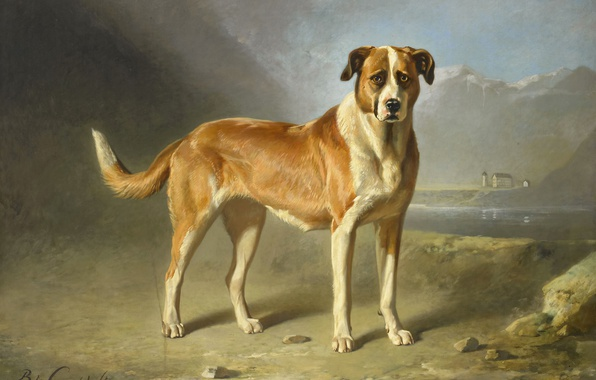 Picture animals, oil, dog, picture, St. Bernard, Bernard Gent