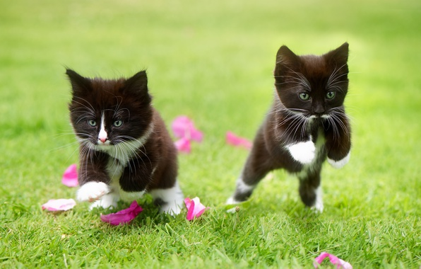 Picture grass, the game, petals, kittens, kids, a couple, two kittens