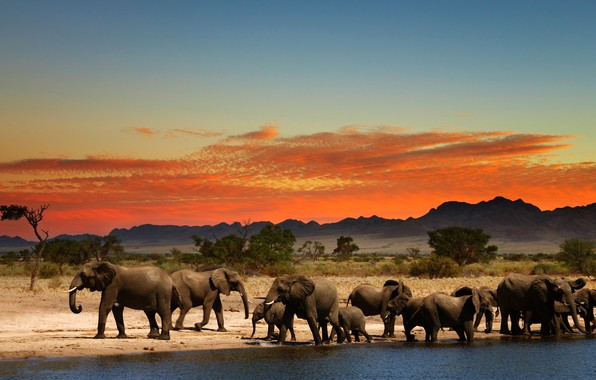 Picture glow, Africa, elephants, drink, the herd
