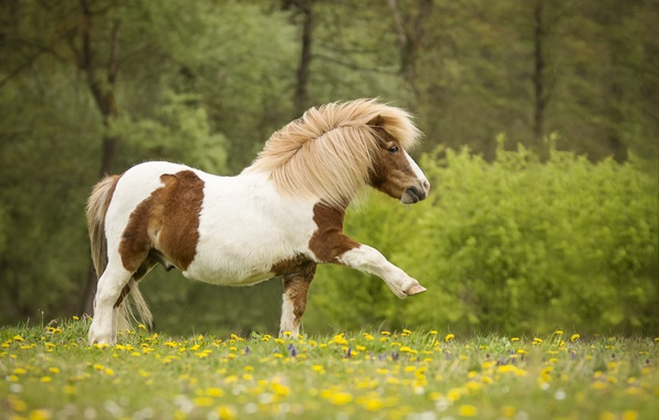 Picture flowers, nature, meadow, pony, horse