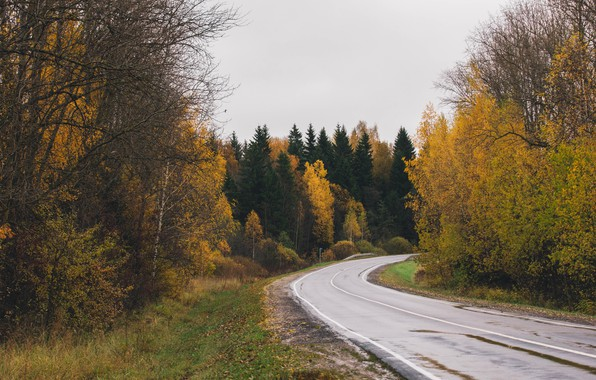 Picture road, autumn, forest, gloomy, autumn forest, Moscow oblast, the suburbs, autumn road