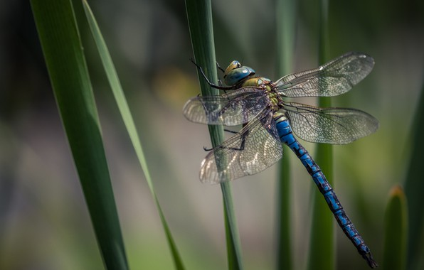 Picture dragonfly, insect, dragonfly