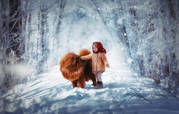 Picture winter, snow, child, dog, girl, shawl, Chow, coat