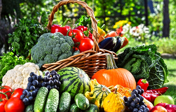 Picture greens, basket, apples, watermelon, garden, grapes, eggplant, pumpkin, pepper, fruit, vegetables, tomatoes, carrots, cabbage, cucumbers