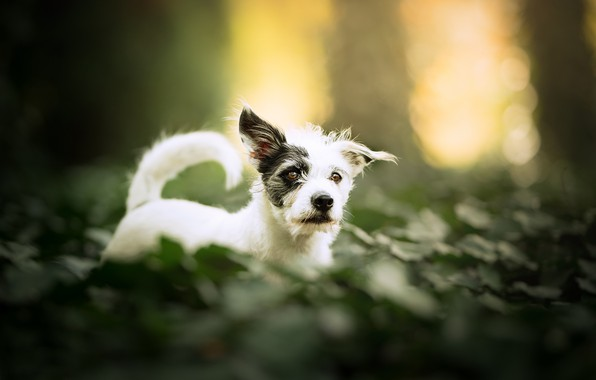 Picture bokeh, doggie, dog