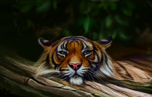 Picture nature, tiger, by SalamanDra-S