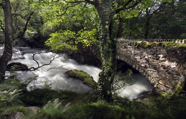 Picture bridge, river, tree
