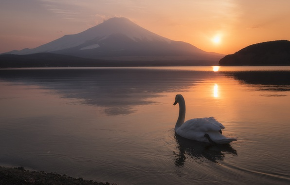 Picture landscape, sunset, lake, bird, mountain, the volcano, Japan, Swan, Japan, Mount Fuji, Fuji, Lake Yamanaka, …