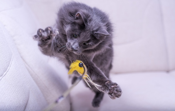 Picture cat, jump, toy, the game