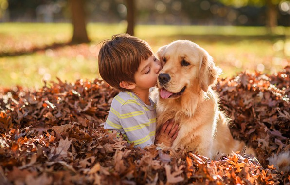 Picture autumn, leaves, foliage, dog, boy, friendship, friends, Golden Retriever, Golden Retriever