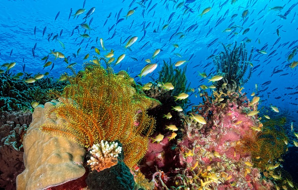 Picture sea, water, fish, algae, nature, the ocean, corals, underwater world, under water