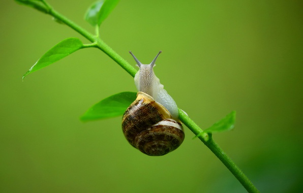 Picture greens, macro, background, snail, stem, a blade of grass