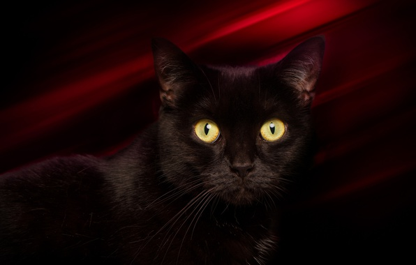 Picture eyes, cat, mustache, look, background, black, cat